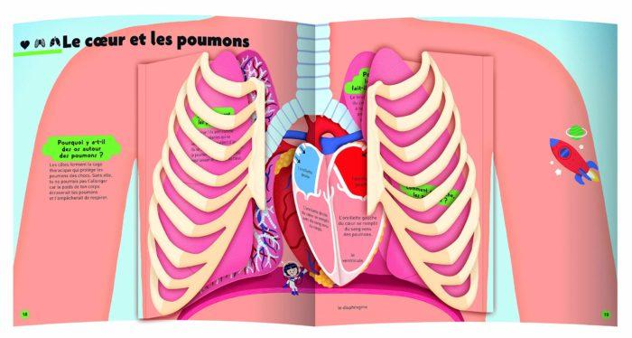 """présentation de la double page animée """"le coeur est les poumons"""" extraite du du documentaire jeunesse le kididoc du corps humain."""